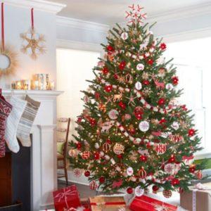 reuse-live-christmas-tree-rental
